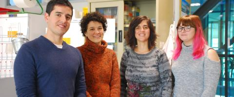 CRAG and UB researchers find basic mechanisms for root growth and cell replenishment